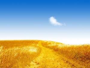 Fields_of_gold-300x225