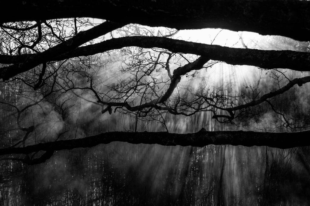 Metsämaisema, jossa valo siivilöityy mustien oksien välistä kohti maata.