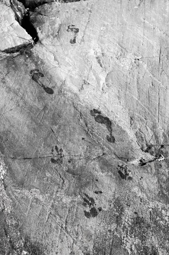 Rantakalliolla on märät jalanjäljet, jotka ovat ensin eläimen ja sitten jatkuvat ihmisen jälkinä.