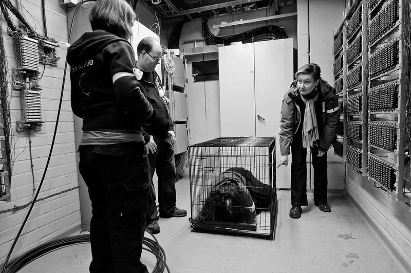Karussa varastohuoneessa on häkki ja häkissä makaa hahmo. Häkin ympärillä seisoo kolme hahmoa katselemassa vangittua.
